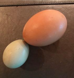 Egg_Comparison