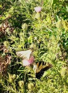Flutter Bys!