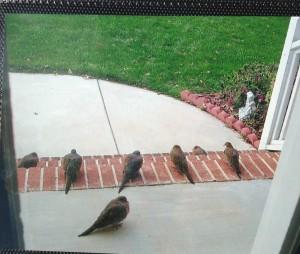 Sentinel doves