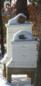 beehivesinsnow
