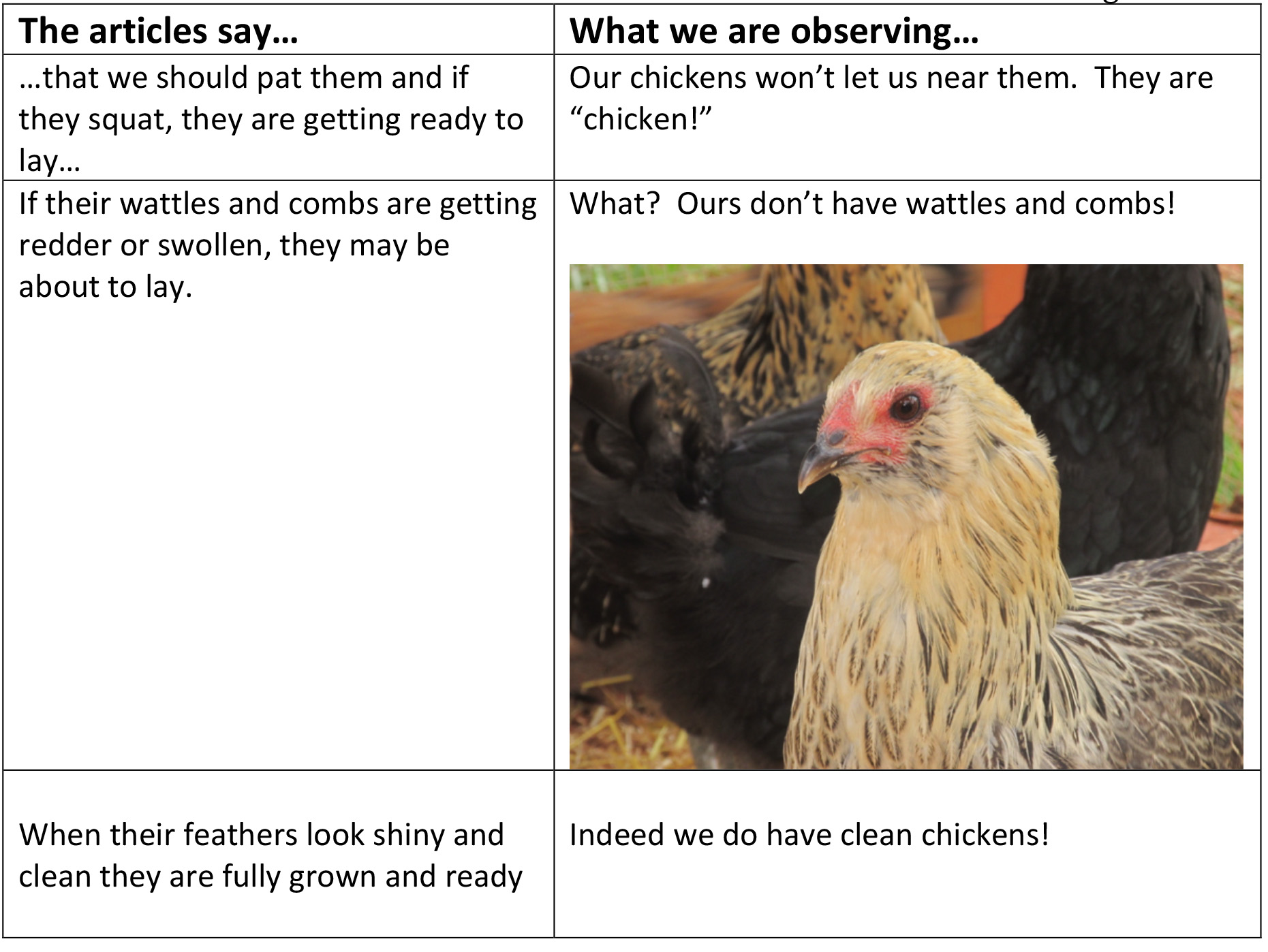 ChickenObservations